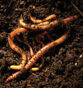 Composting 101: Five Different Ways to Compost