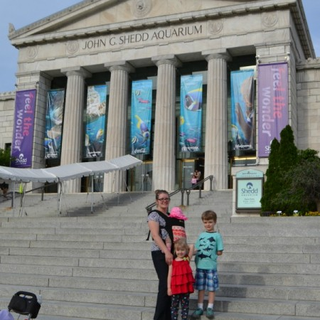 shedd aquarium chicago family travel