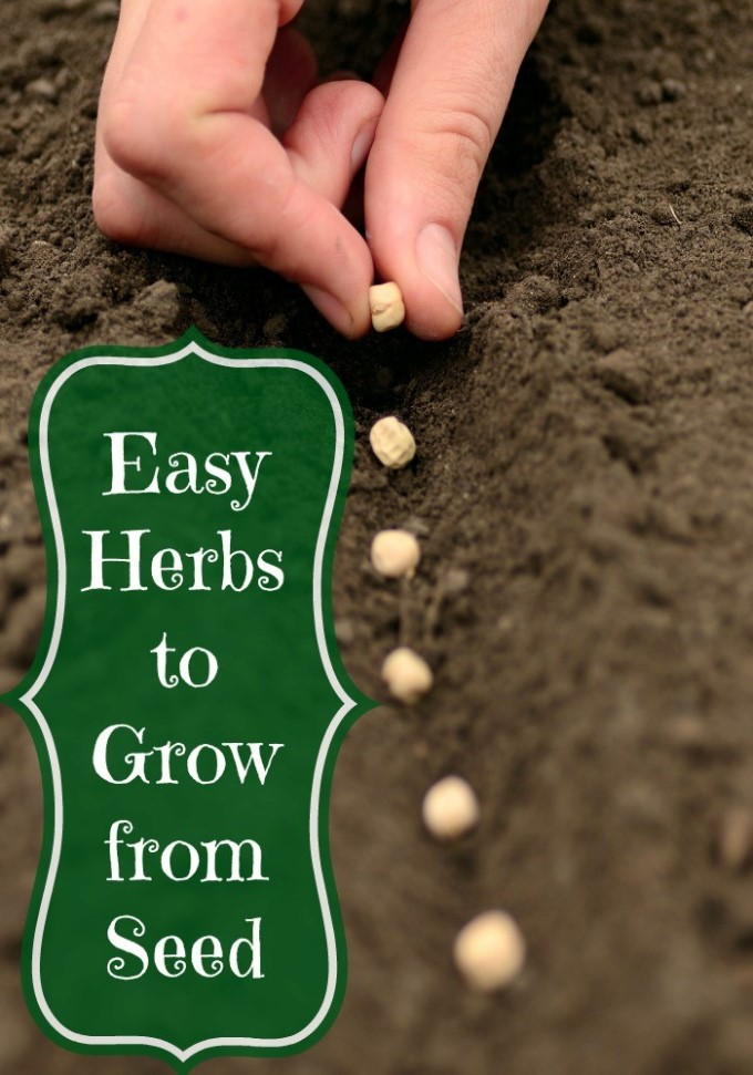 Easy Herbs to Grow From Seed