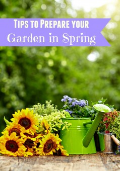 Tips to prepare your garden in the spring