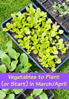 Vegetables to Plant  (or Start) in March_April