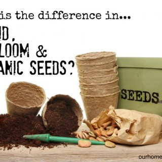 seeds what is the difference
