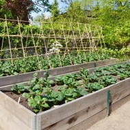 Reducing the start up costs of growing your own produce
